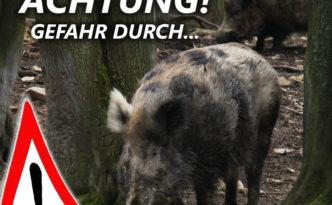 Achtung Wildschweine2